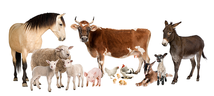 group of farm animals : cow, sheep, horse, donkey, chicken, lamb