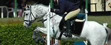 horse-sliderx220