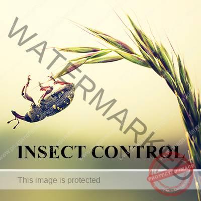 https://www.pnagandfarm.com.au/wp-content/uploads/2016/11/C-INSECT-CONTROL.jpg