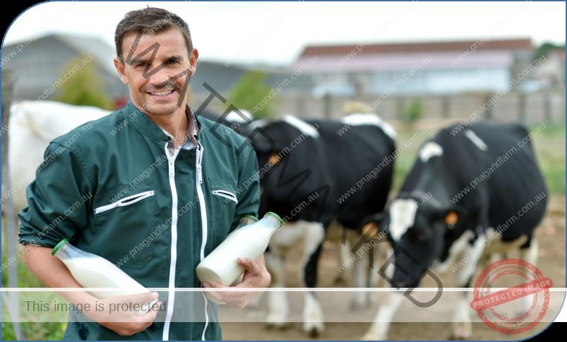 farmer - cows