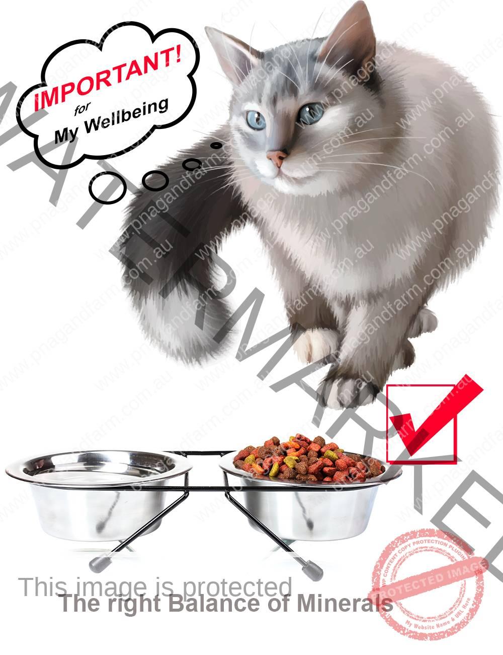 cat food balance